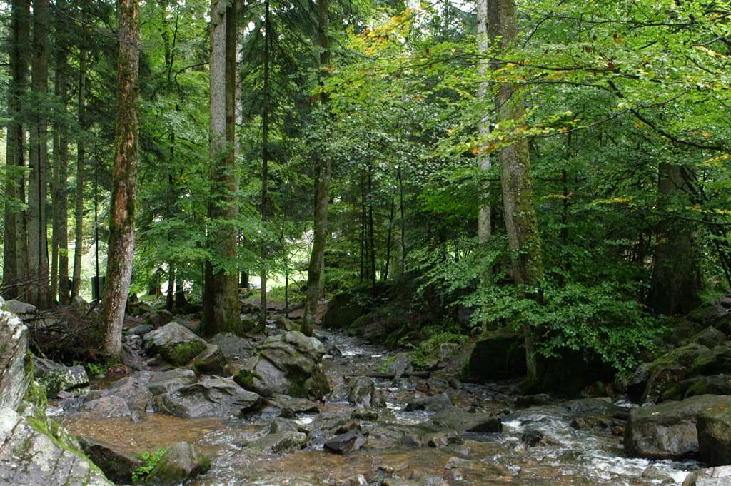 Une rivière court dans une forêt de feuillus.